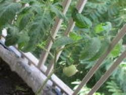 دانلود پاورپوینت سبزی کاری